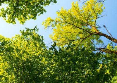 mijn-boom-mijn-stad3